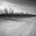 Winter Orchards, San Joaquin Valley, Calif.