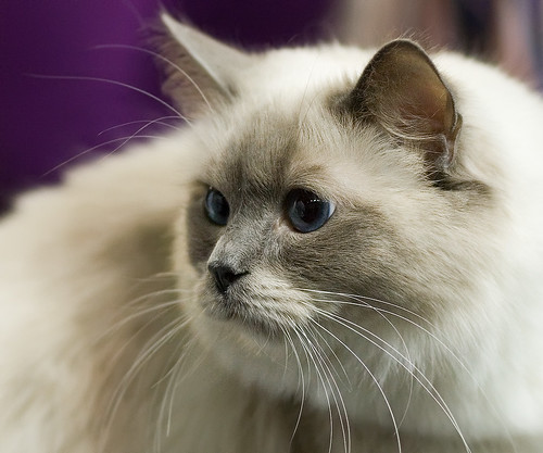 Cat show: Form | by Tomi Tapio