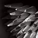 Tin of Pencil Crayons Black & White