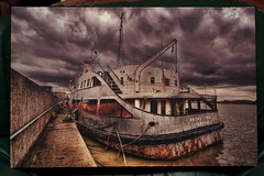 Royal Iris on Canvas | by Dave Wood Liverpool Images