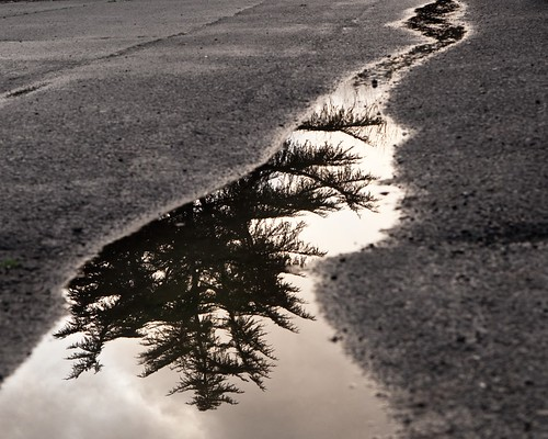 Puddle Reflection 9738 | by CatDancing