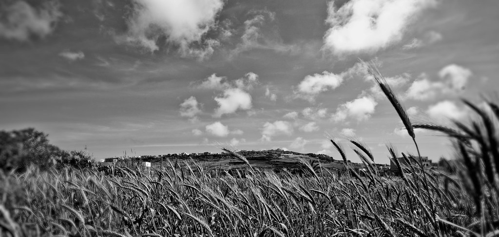 Black and White fields. | Nicholas Abela 2010 Please View On… | Flickr