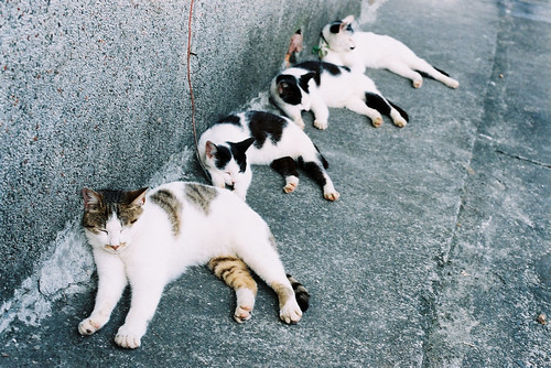 Fantastic Four...Cats 驚奇四睡喵 | by C.L.I.W
