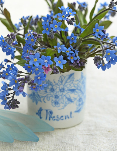 Forget-me-not | by Of Spring and Summer