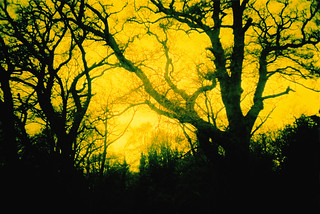 yellow light and trees | by Maya Newman