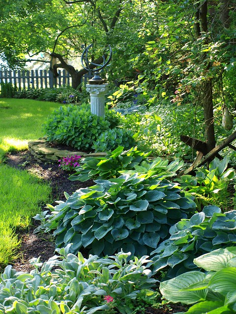 Landscaping Ideas For Front Yard Shade : Back yard hostas native to eastern asia hosta came