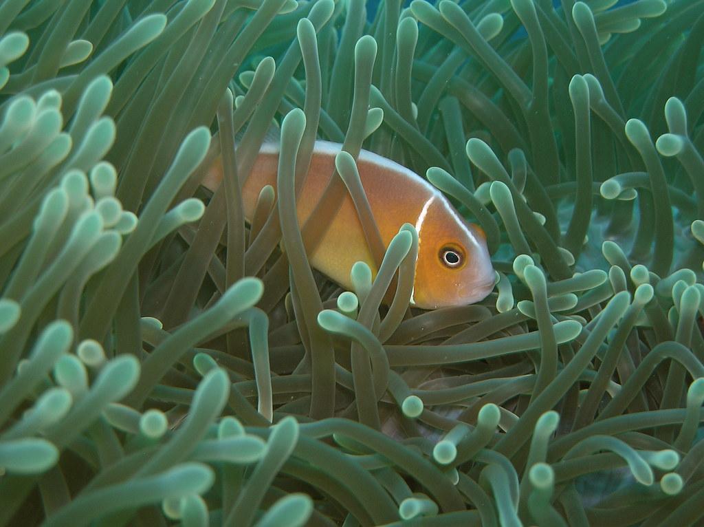 great barrier reef threats essay help