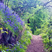 bluebells path