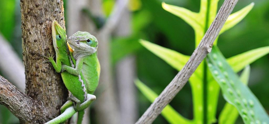 зеленая ящерица ствол загрузить