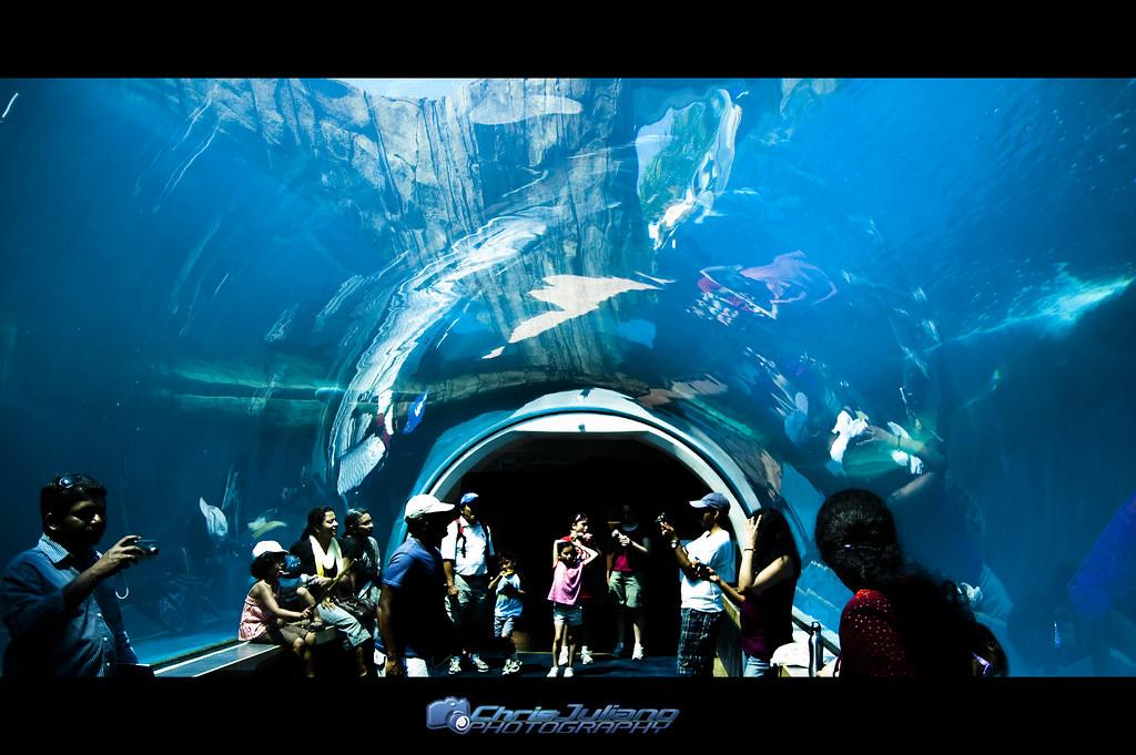 Ppg Zoo And Aquarium