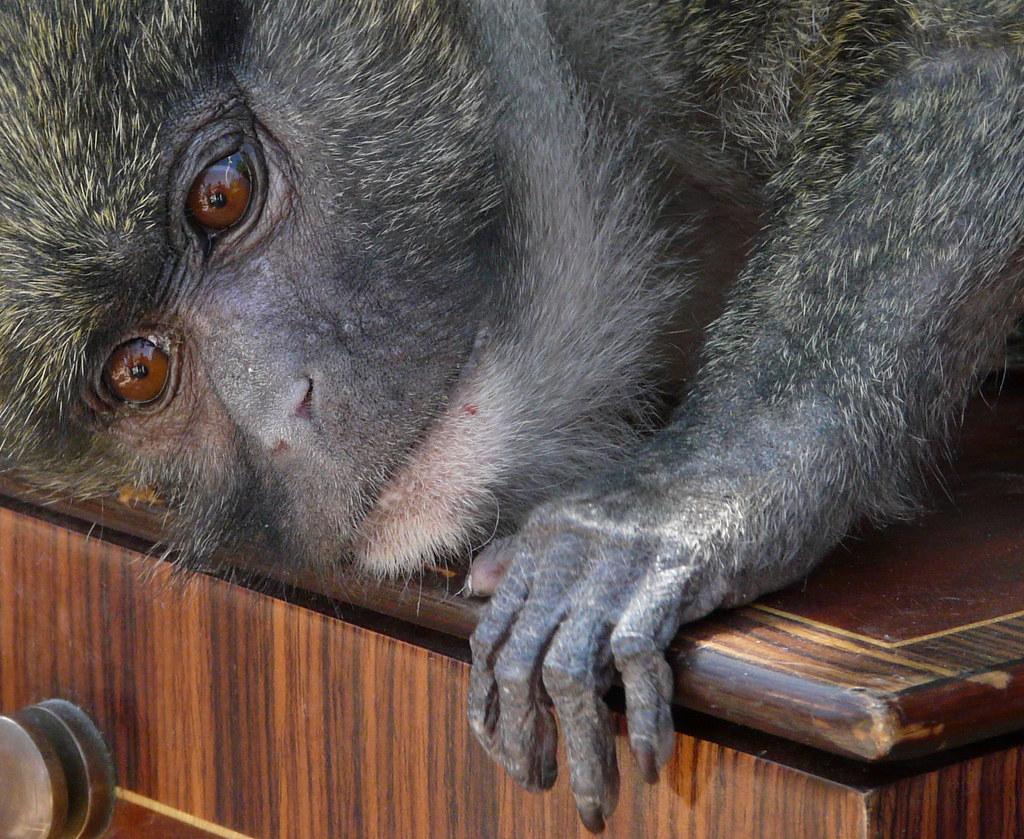 Eddy S Monkey Island