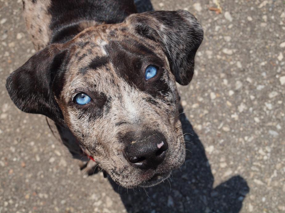 Old Blue Eyes Is Back Beau Short For Beauregard Is