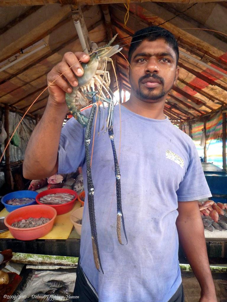 Vangst van vandaag catch of today 15 11 2009 india for Arabische havenstad