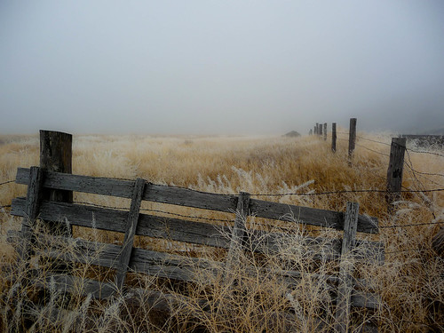 Fog, Fence, Field | by ex_magician