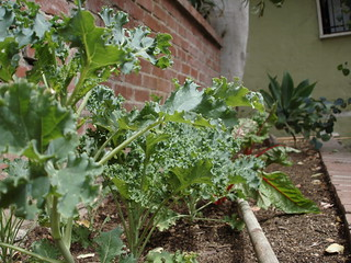 Looking For Truly Effective Organic Gardening Tips? Read On!