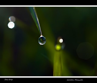 Dew drop | by G. Maxwell