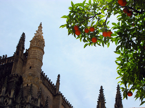 Cathedral orange grove | by wit