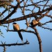 Pair of birds in early morning
