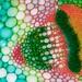 Trifolium pratense vascular bundle, 20x
