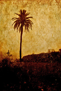 Palm .- | by ancama_99(toni)