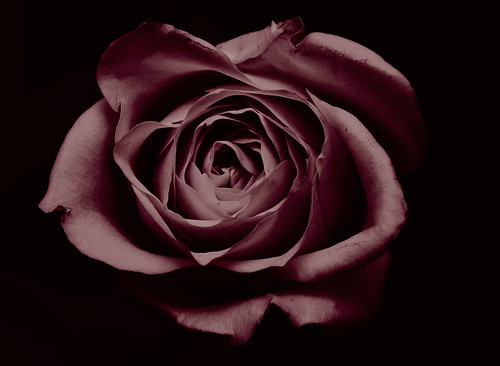 BW Rose Red Tinted Mk II | by Welsh Photographer
