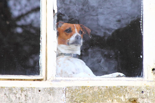 Dog in the Window (3) | by Jay Tilston