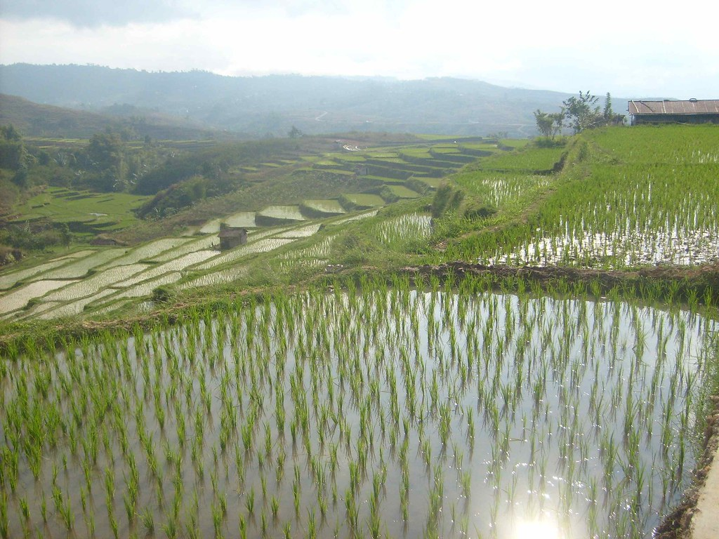 Sawah Watu Alo | Wet rice cultivation was established in ...