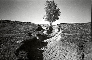 Trees and Gully, Craig, NE, 1980