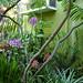 My backyard, with species Epidendrum poryphyreum from Ecuador