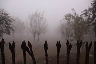 Fence & Trees in the Fog, Mehtab Bagh - Agra | by ChrisGoldNY