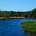 Myakka River State Park River Trees Blue Sky Grasses