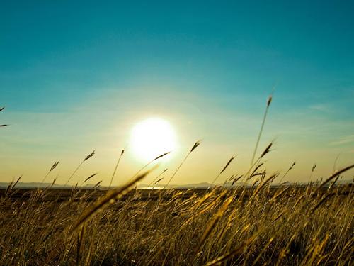 Summer Sun - Wallpaper, High Definition, High Quality