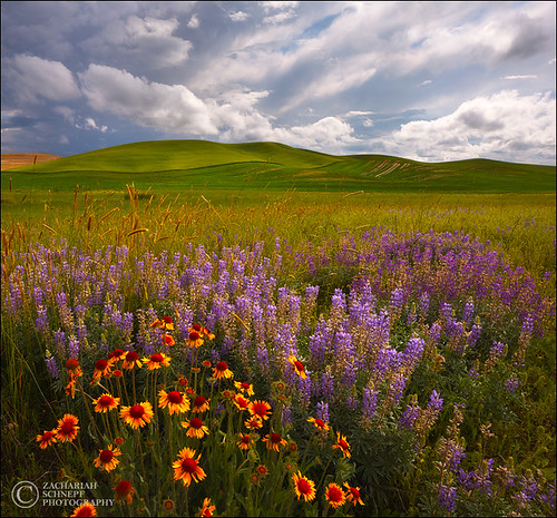 Palouse Bouquet (square crop) | by Zack Schnepf