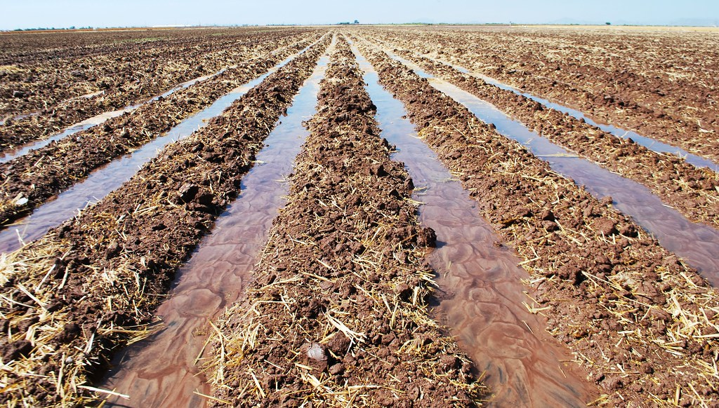 Furrow Irrigated Raised Bed System
