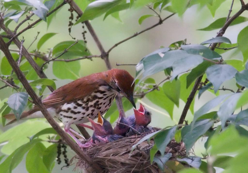 Free bird gape - 1 3