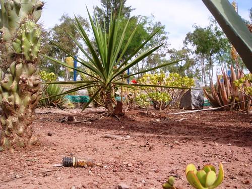 plantas del desierto yahoo dating