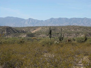View from E side of San Pedro River, S of Kielberg Canyon, SE of San Manuel, AZ | by Lon&Queta
