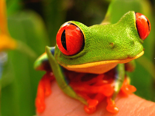 Rainforest´s eyes | by Pedro Segura-