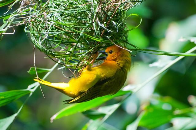 l 39 oiseau fait son nid explore benji p photo 39 s photos on. Black Bedroom Furniture Sets. Home Design Ideas