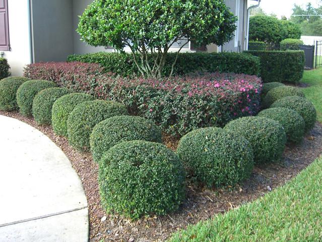 Round Bushes Jimima88 Flickr