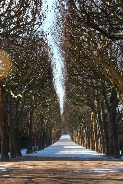 Jardin des plantes de paris promenade dans les rues de for Plante 1 euro paris