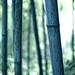 Bamboo Detail - China