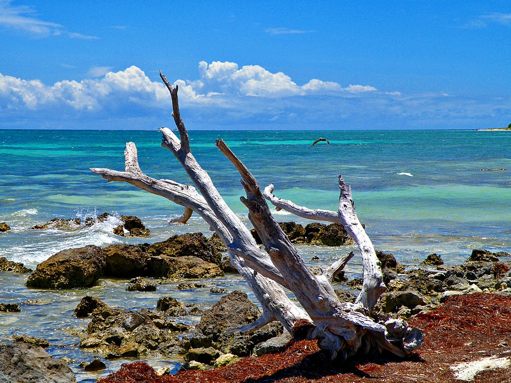 Driftwood And The Pelican If There S Nothing Good On