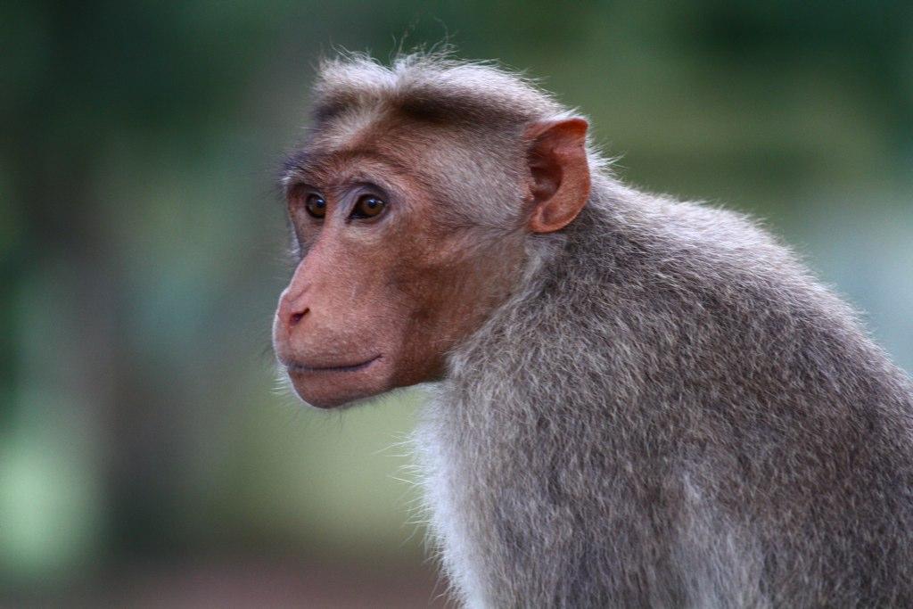 Monkeys Looking Sideways | Cameron Herold