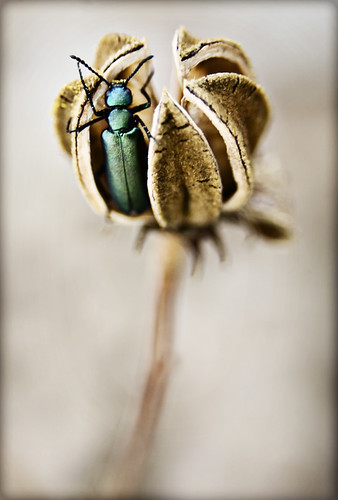 Bug2 | by andrea matrix