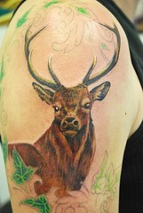 deer tattoo start of my new sleeve by traci wilson encha flickr. Black Bedroom Furniture Sets. Home Design Ideas