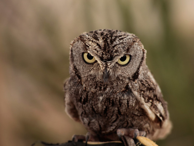 owl modelle partytreff mg