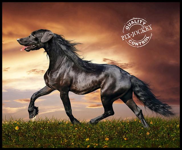 DOG + HORSE = DORSE