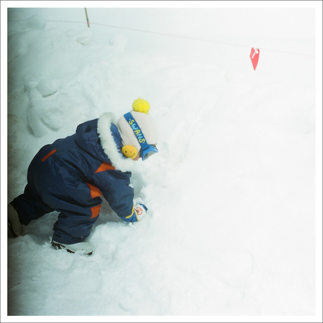 [url=https://www.flickr.com/photos/... [春の雪國] 類似