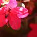 Filoli Gardens 025